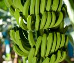 kromme bananen